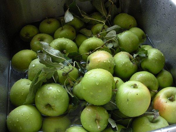 Apples0709