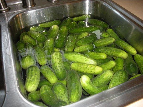 Cucumbersinsink