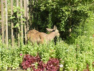 Deer0710
