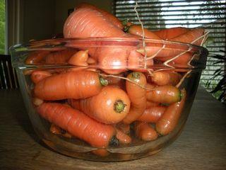 Carrots1010